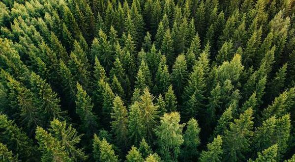 RUSAL planted half a million trees in the Irkutsk Region